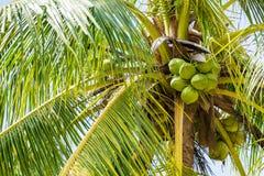 Coconut tree on blue sky Stock Photo