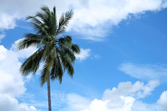Coconut tree and blue sky. Coconut tree on blue sky background with space for text Royalty Free Stock Photo