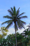 Coconut tree and blue sky at the beach. Coconut tree and blue sky at the beach, concept for background texture Royalty Free Stock Photos