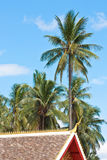 Coconut tree with blue sky and cloud and part of t Royalty Free Stock Images