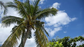 Coconut tree and blue sky with clouds stock footage