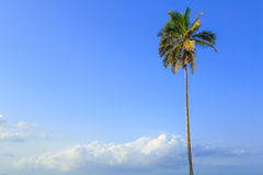 Coconut tree and blue sky Stock Images