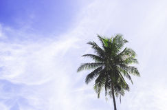 Coconut tree with blue sky stock photography