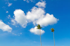 Coconut tree with blue sky Royalty Free Stock Photography