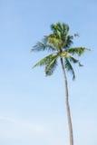 Coconut tree on blue sky Royalty Free Stock Image