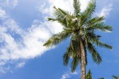 A coconut tree on blue sky Stock Photography