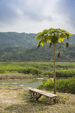 Coconut tree breakout area. Coconut tree breakout wooden chair stock photography
