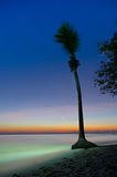 Coconut tree on the calm seascape Stock Photo