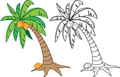 Coconut tree. Cartoon coconut tree illustration, in color and black n white version Royalty Free Stock Photos