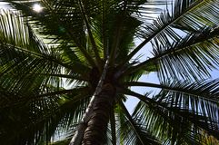 Coconut tree Stock Image