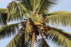 Goa Baga Royalty Free Stock Photos