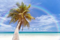 Coconut tree. On the beach Stock Photography