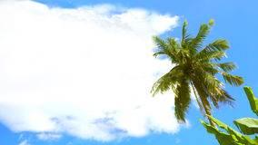 Coconut tree and Coud have free space for your word Stock Images
