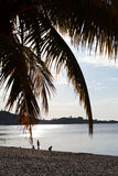 Coconut tree at dawn on the beach. Dawn on the beach, Madagascar Royalty Free Stock Images