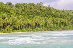 Coconut Tree Fan. In Koh Kood,Thailand royalty free stock photography