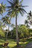 Coconut tree fisheye view Royalty Free Stock Images
