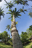 Coconut tree fisheye view Stock Photo