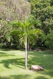 Coconut tree in the garden Stock Photos