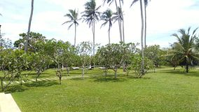 Coconut tree garden near sea stock images