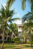 Coconut tree and garden in thailand Stock Photos