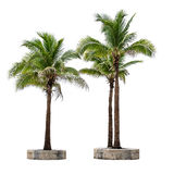 Coconut tree group Stock Images