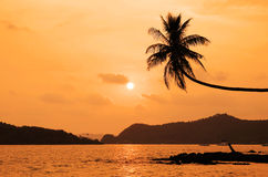 Coconut tree hanging over the beach Stock Image