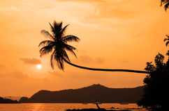Coconut tree hanging over the beach Royalty Free Stock Photo