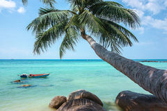 Coconut tree hanging over the beach. And turquoise sea Royalty Free Stock Image