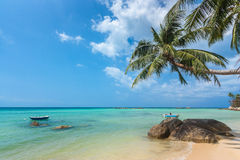 Coconut tree hanging over the beach Royalty Free Stock Image