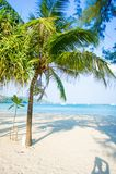Coconut tree on the huahin beach Royalty Free Stock Photo