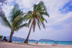 Coconut tree on the huahin beach Royalty Free Stock Image