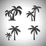 Coconut tree icon Royalty Free Stock Photo