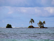 Coconut tree island Stock Photos