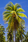 Coconut tree on island Stock Image