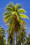 Coconut tree on island Stock Image