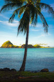 Coconut Tree and Island Stock Photos