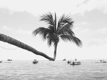 Coconut tree jutting out into the sea. Dark Coconut tree jutting out into the sea Stock Photos