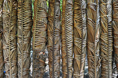 Coconut tree leaf Royalty Free Stock Images