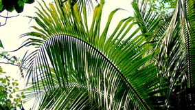 Coconut tree leaf, Tropical. Theme stock video