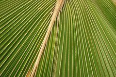 Coconut tree leafs. Inside the parks royalty free stock photography
