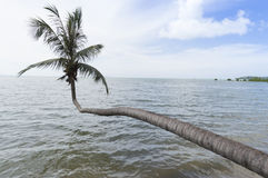 Coconut tree leaning over the sea Royalty Free Stock Image