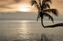 Coconut tree leaning over the sea at sunset Royalty Free Stock Photos