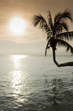 Coconut tree leaning over the sea at sunset Royalty Free Stock Images