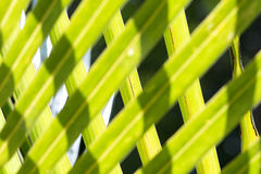 Coconut tree leaves royalty free stock image