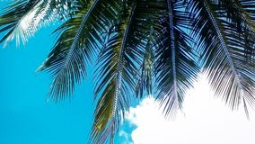 Coconut tree leaves on blue sky. Travel background Stock Photography