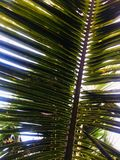The leaves of the coconut trees that provide shade to the ground below royalty free stock images