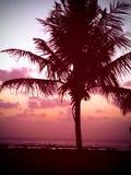 Coconut tree. A coconut tree in Mumbai Stock Photography