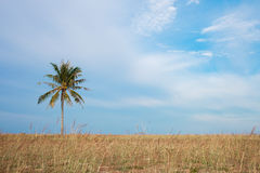 Coconut tree near the sea Royalty Free Stock Photo