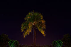 Coconut Tree in the Night Royalty Free Stock Images