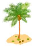 Coconut tree Stock Photos